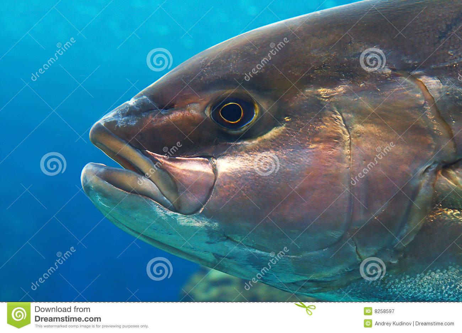 Plot ambre de poissons