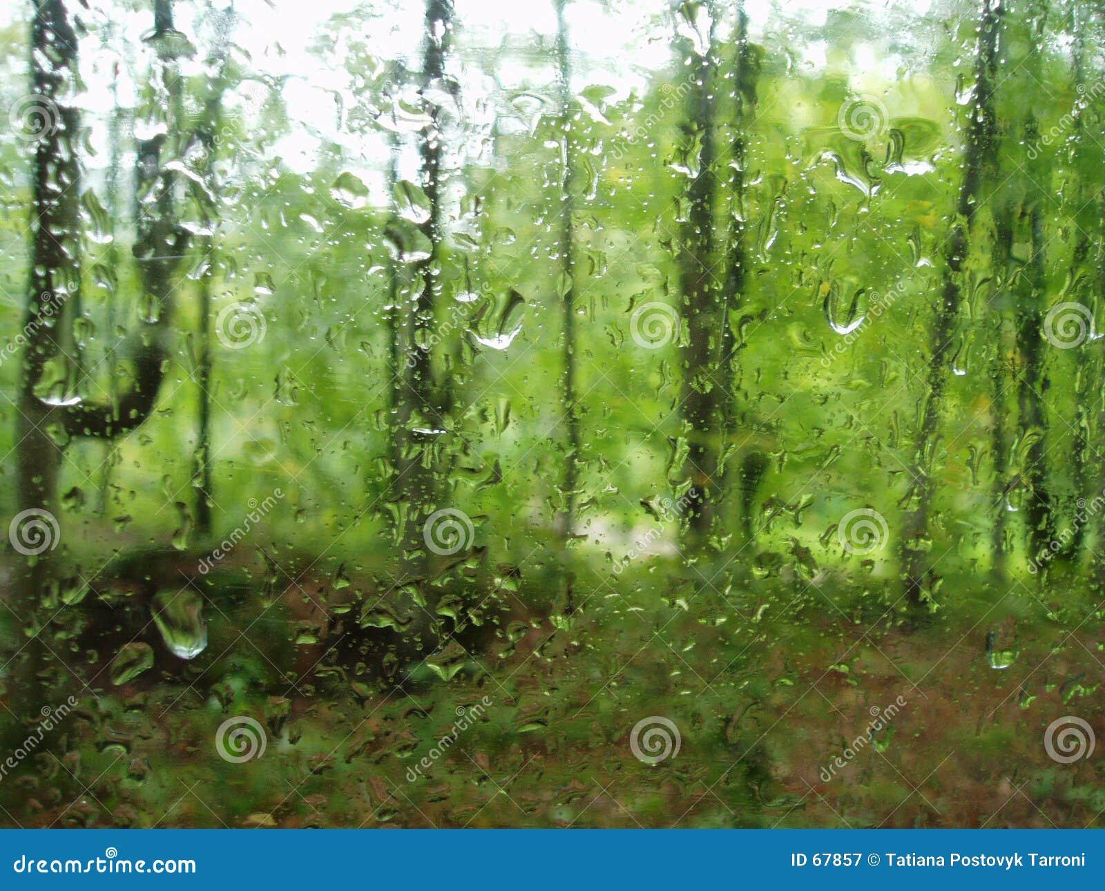 Pluie dans la forêt
