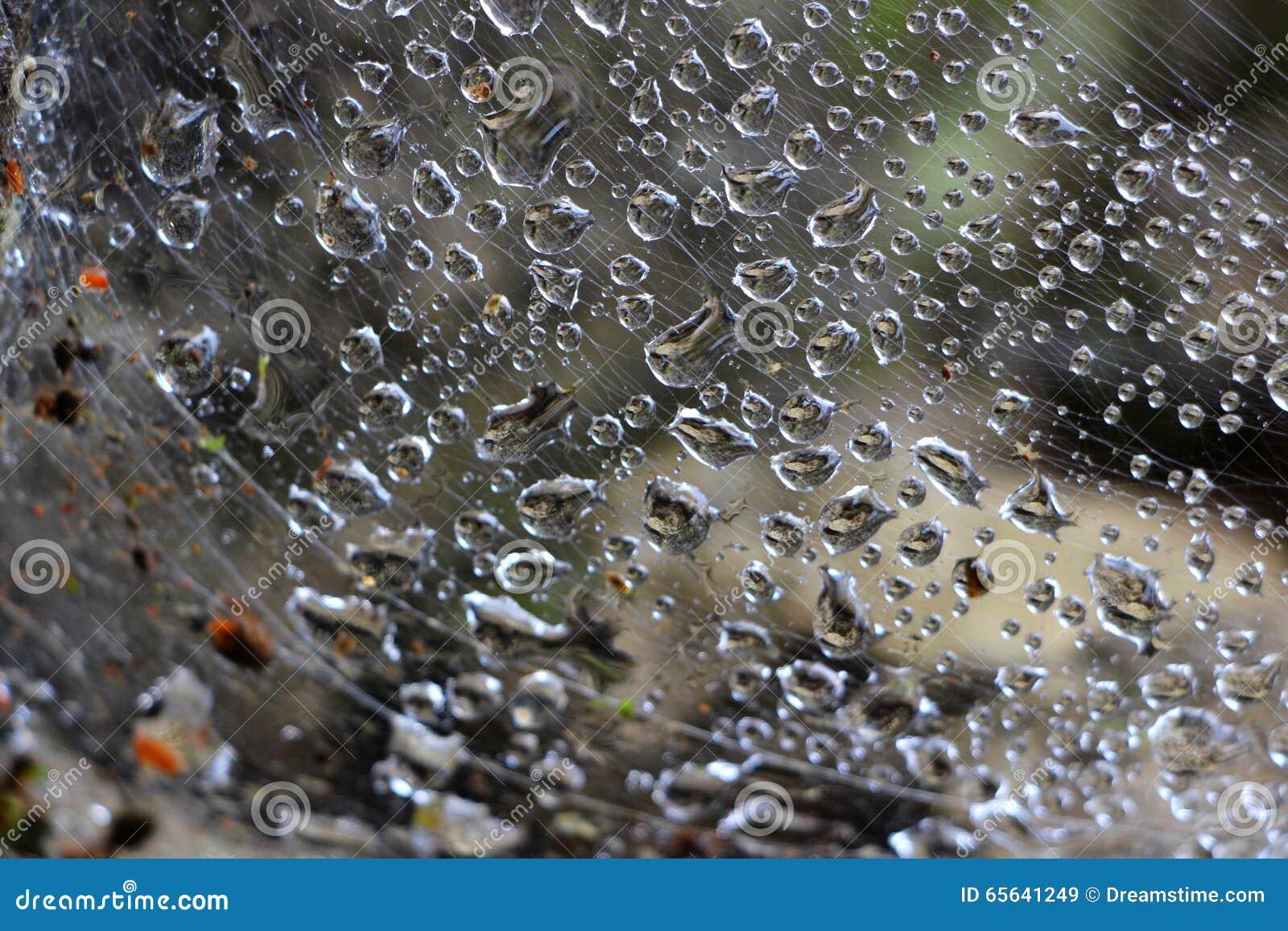 Pluie dans la toile d araignée