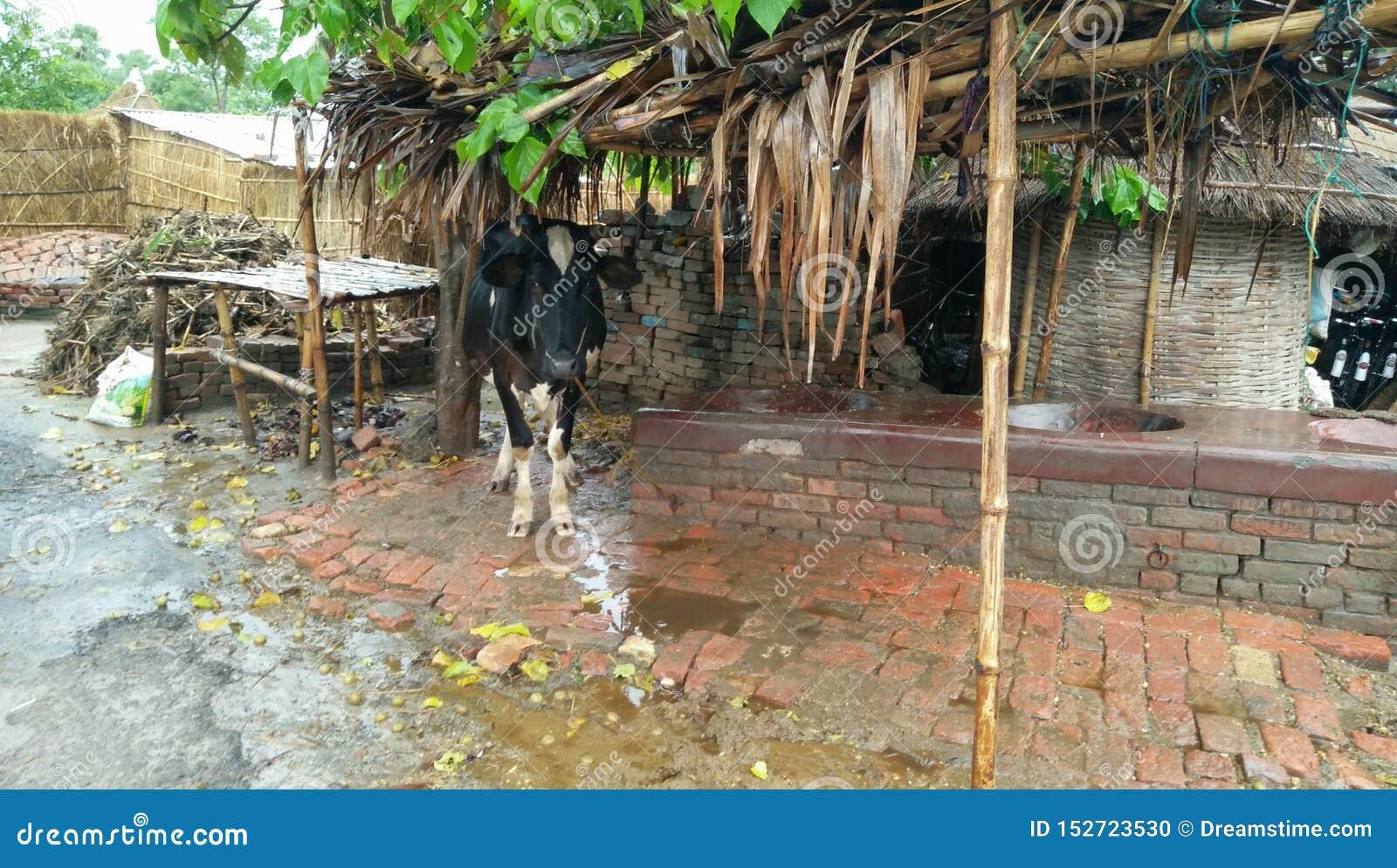 Pluies dans le village