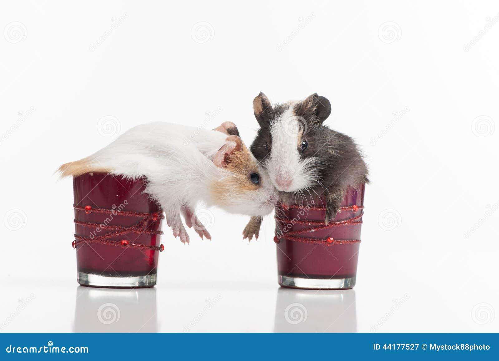 Pluizige grappige hamster twee in glazen