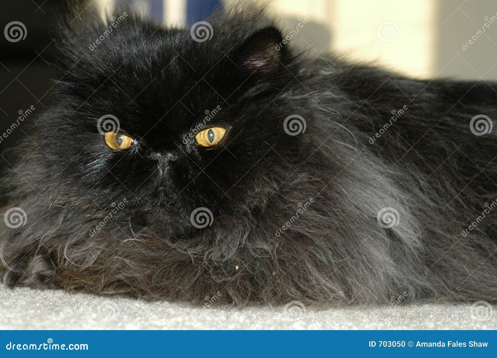 Pluizige kat 4
