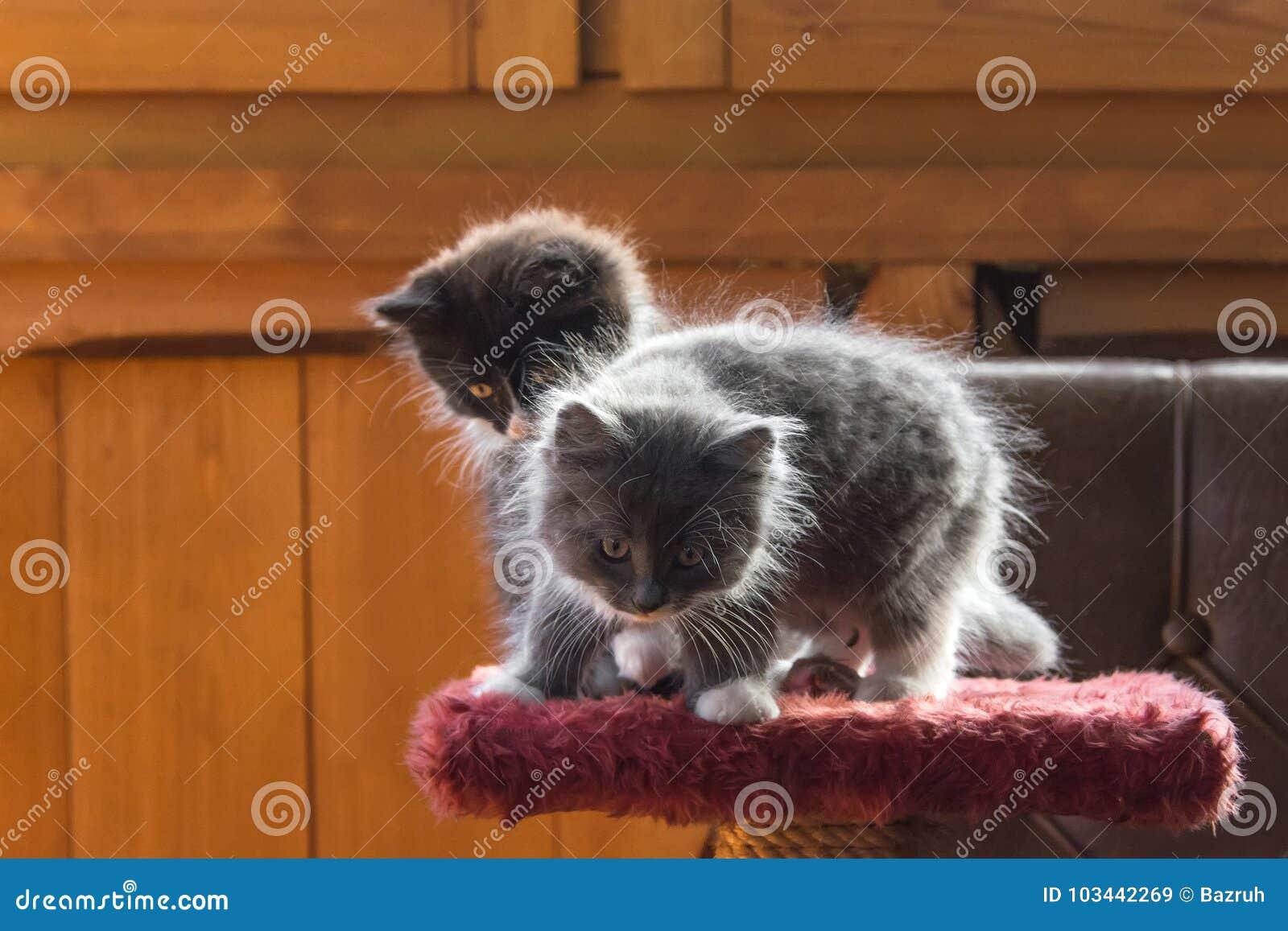 Pluizige katjes