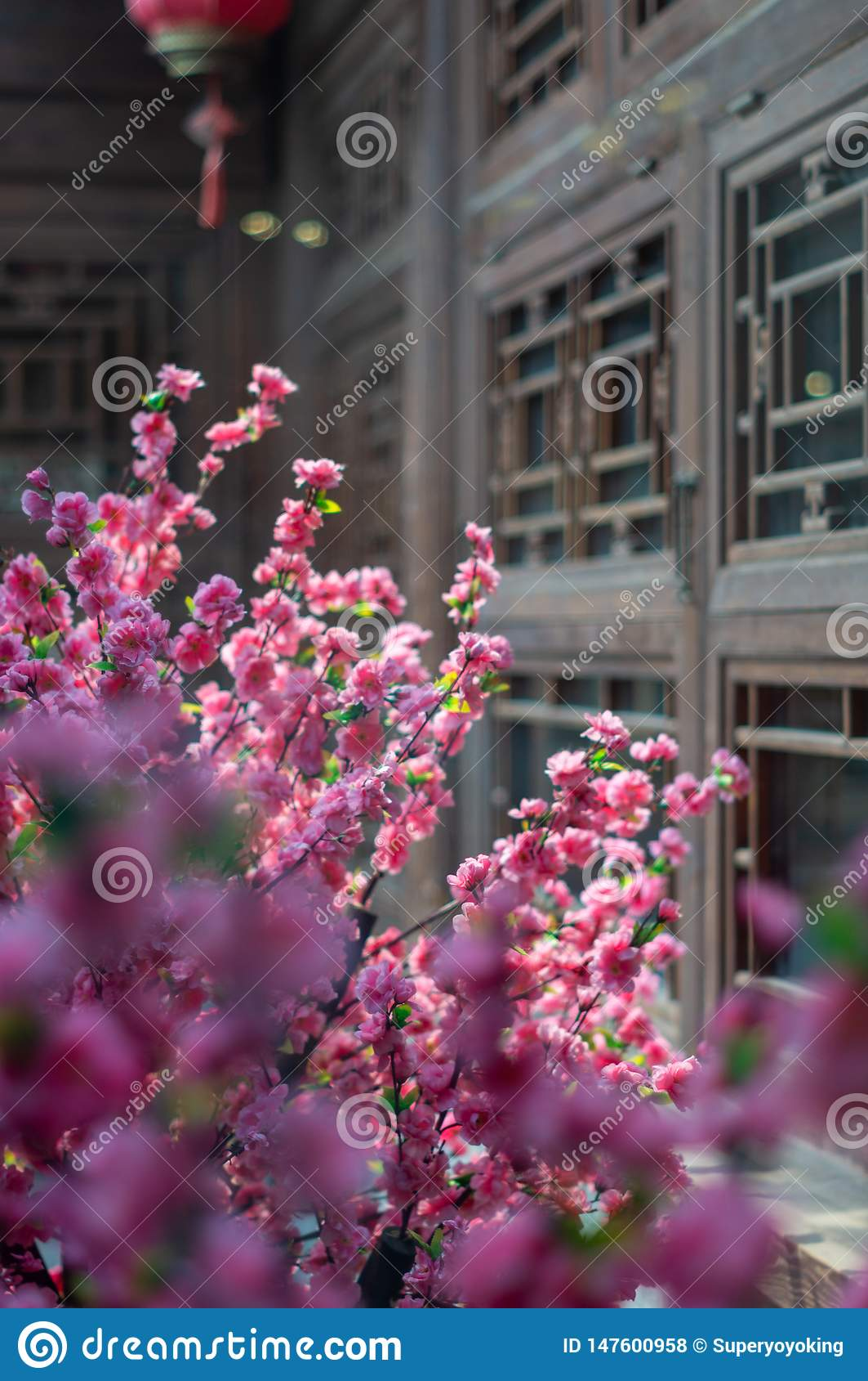 Plum Blossom dans Pékin Hutong