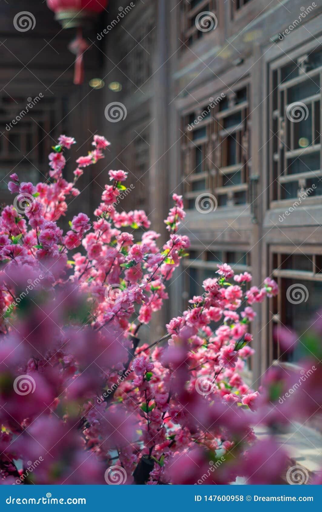 Plum Blossom in Peking Hutong