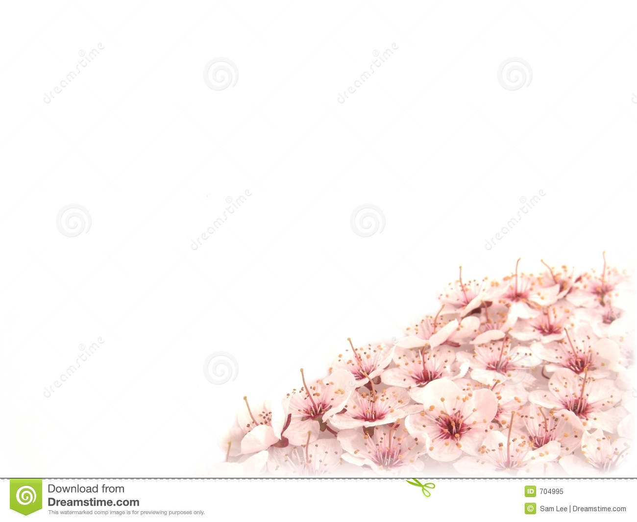 plum flowers template i stock image image of pink hope 704995