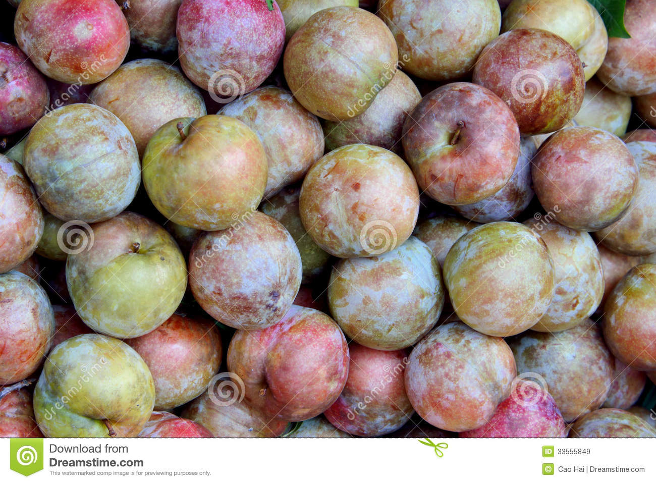 plum fruit cactus fruit