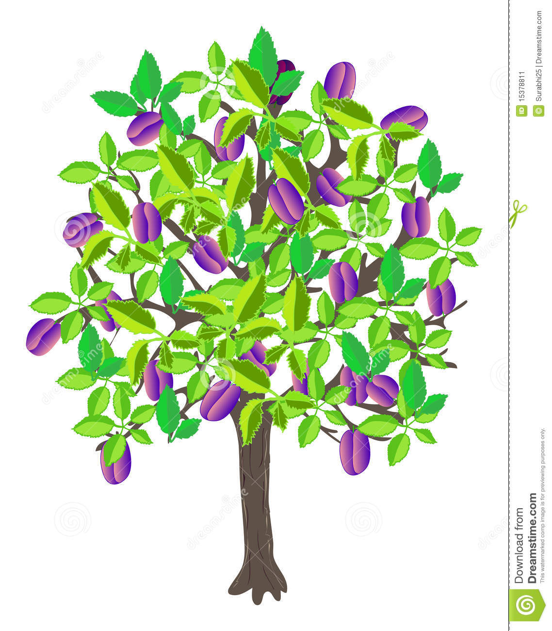 14 Best Images About Plum And Gray Decor On Pinterest: Plum Tree Stock Vector. Image Of Ripe, Vegetable, Leaf