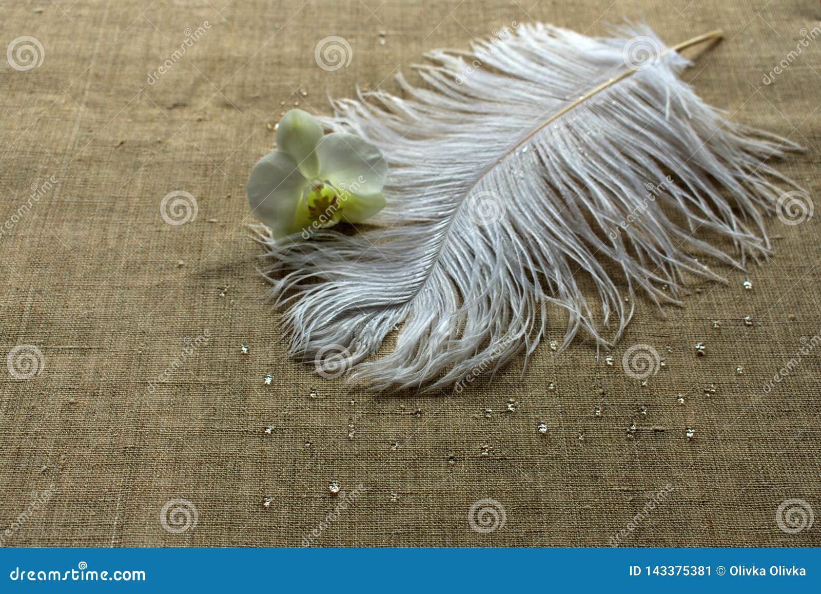 Pluma de la avestruz y flor blancas de la orquídea