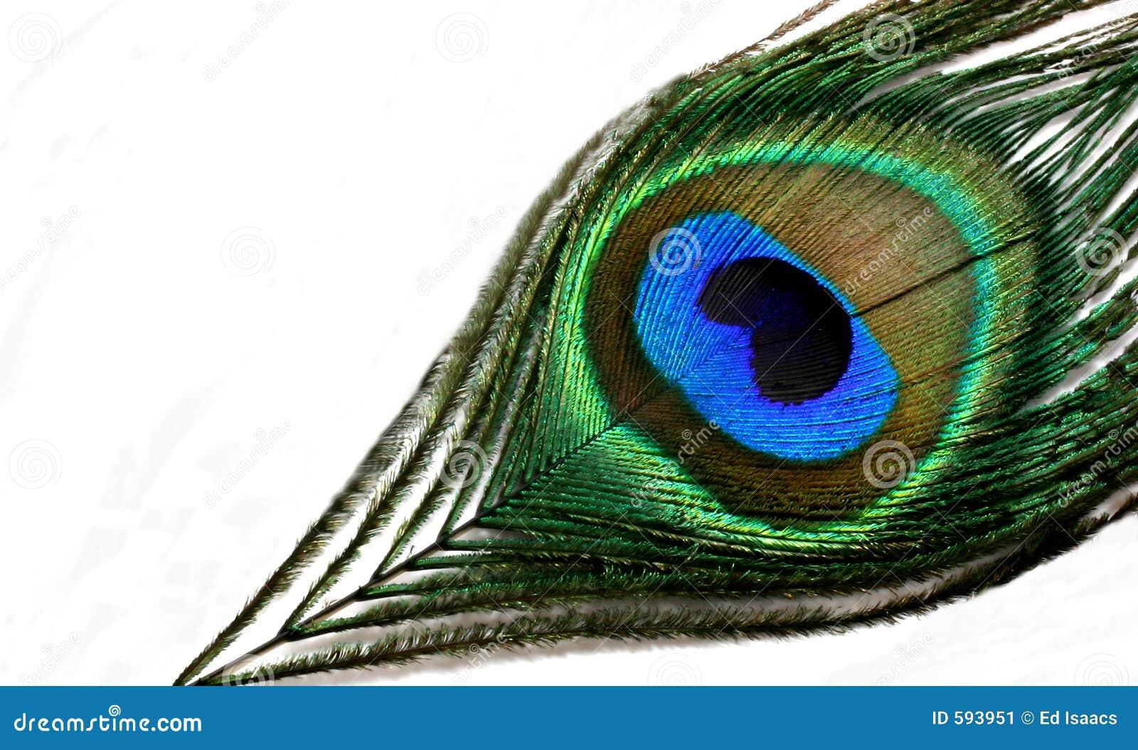 Pluma del pavo real imagen de archivo imagen de colorido - Fotos de un pavo real ...