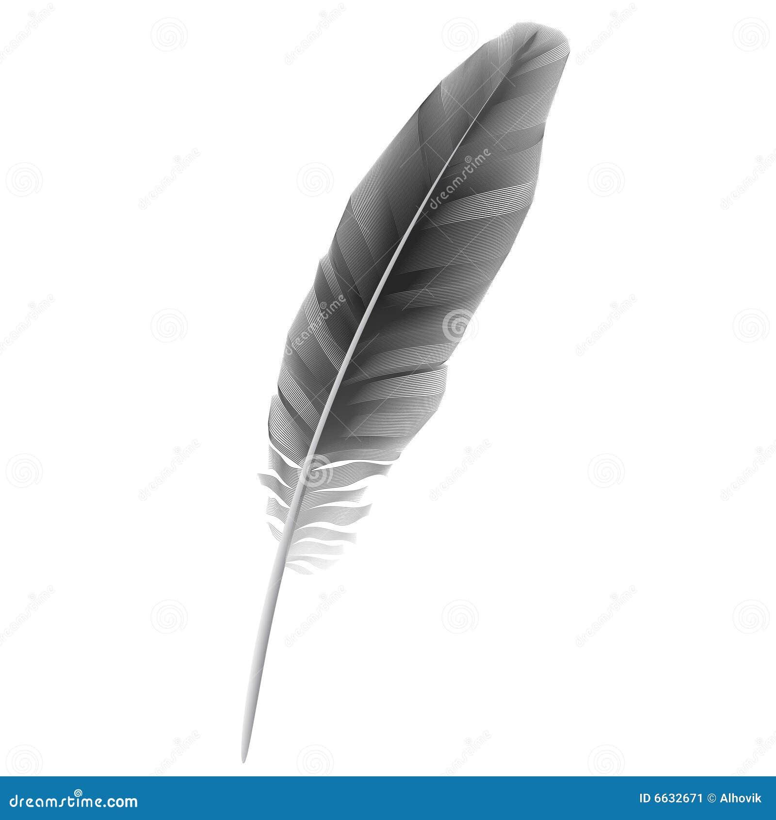Bird Feather Vector