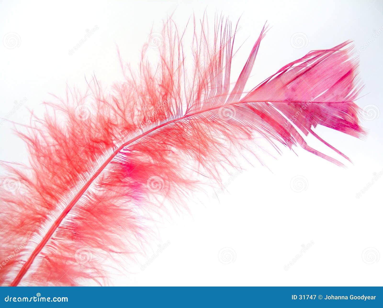 Pluma rosada 2