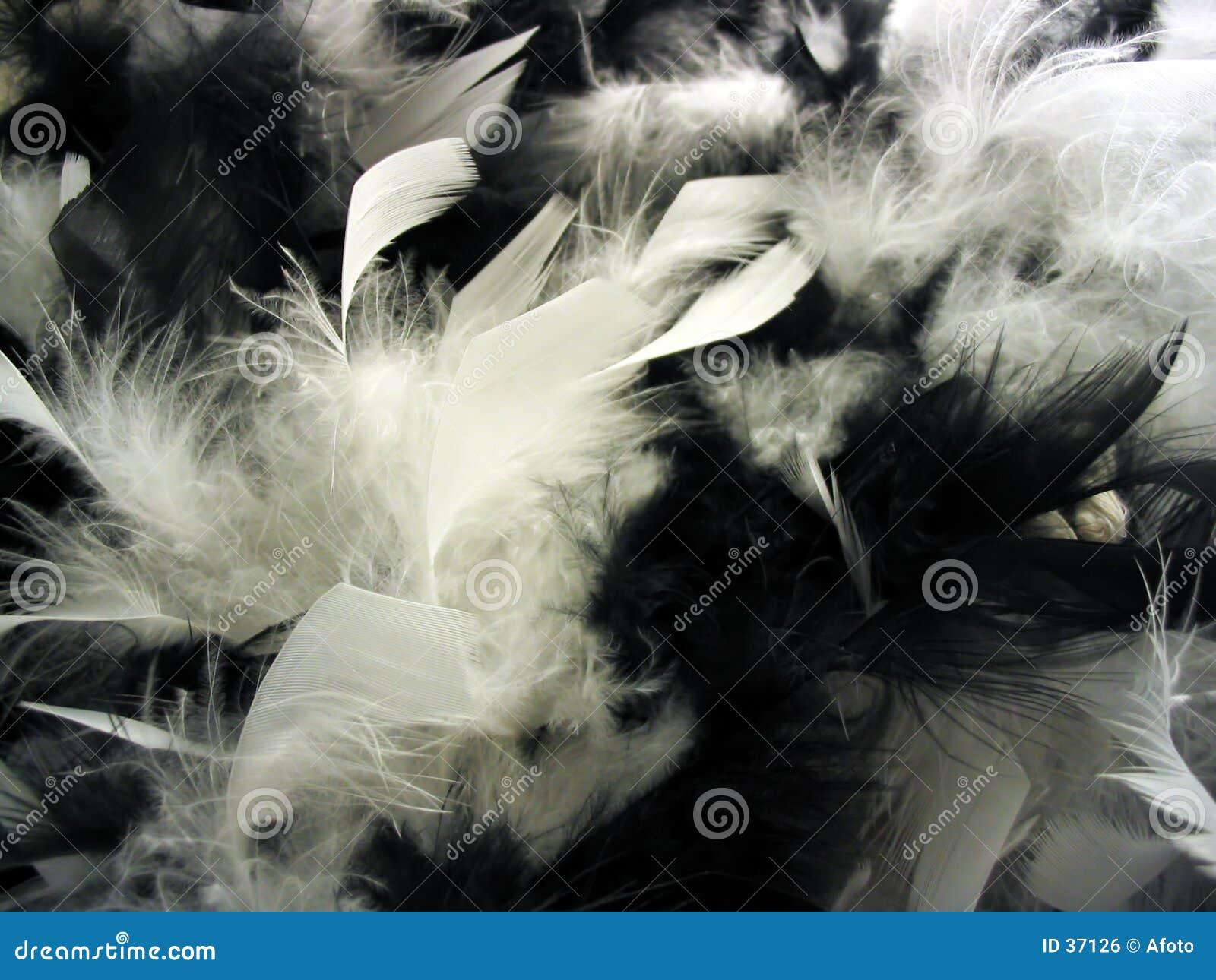 Download Plumas foto de archivo. Imagen de blanco, plumas, contrarios - 37126