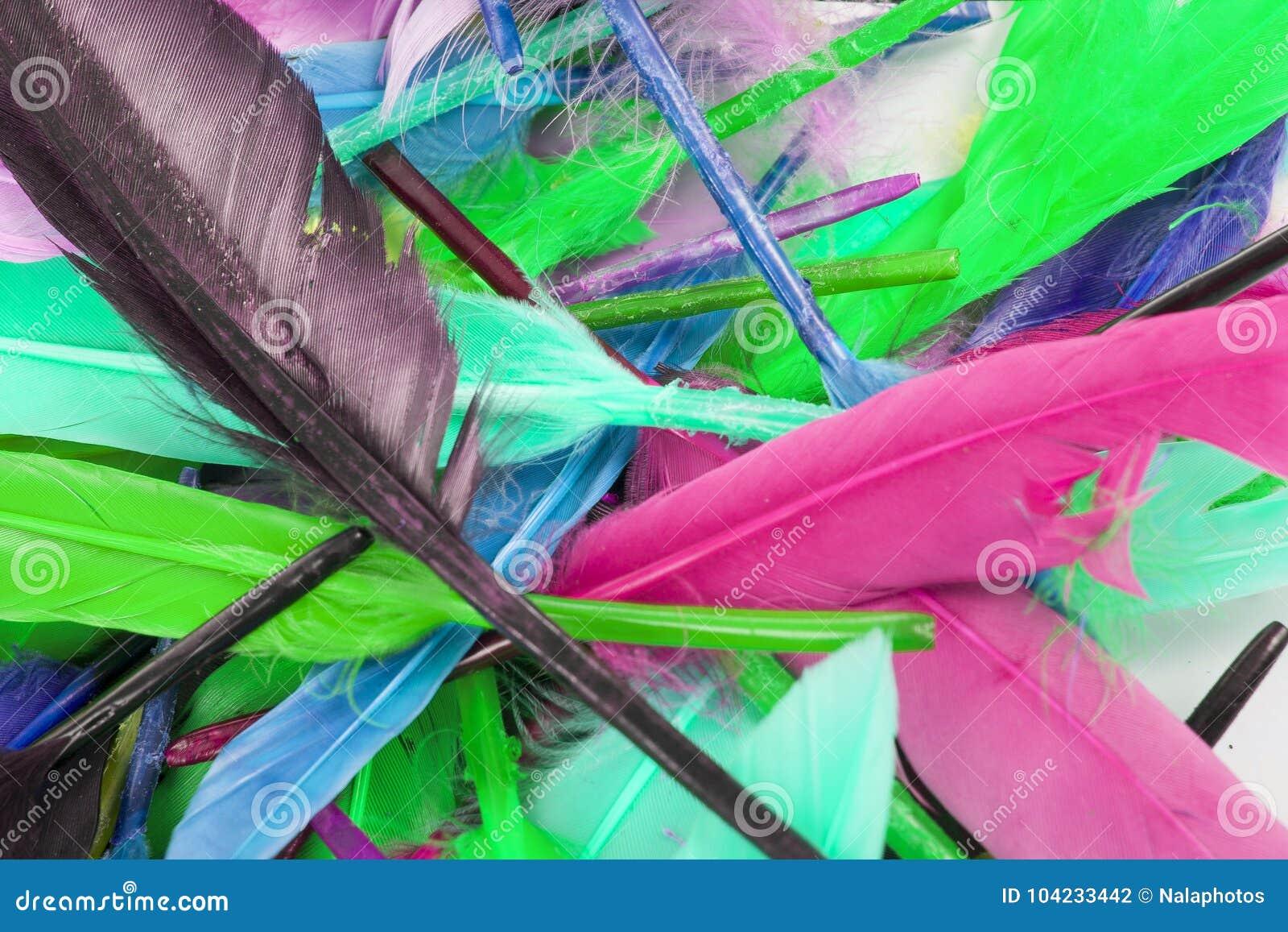 Plumas De Pájaro Coloreadas Color Hermoso Del Arco Iris El