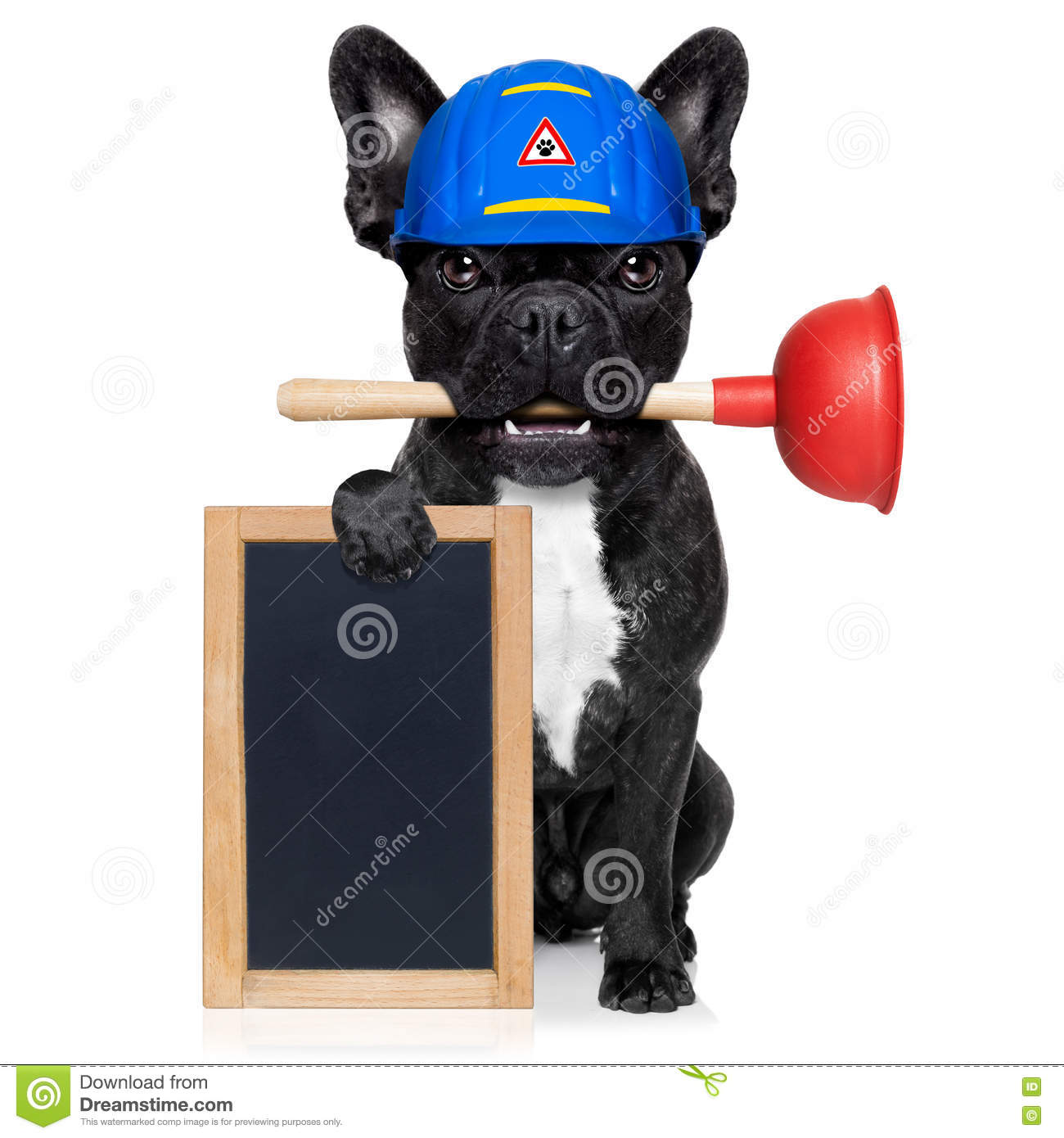 plumber-dog-plunger-handyman-french-bulldog-worker-helmet-mouth-ready-to-repair-fix-everything-home-white-76350086.jpg