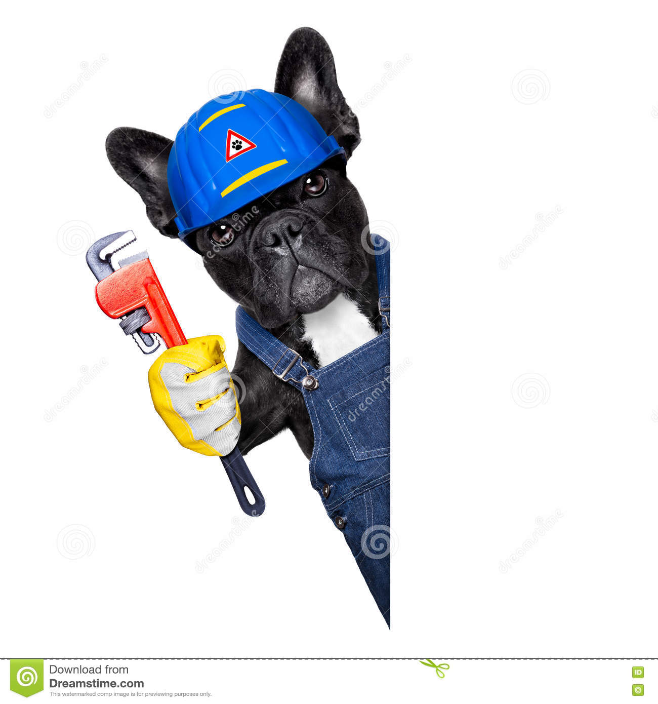 plumber-dog-wrench-handyman-french-bulldog-worker-helmet-paws-ready-to-repair-fix-everything-home-white-76349730.jpg