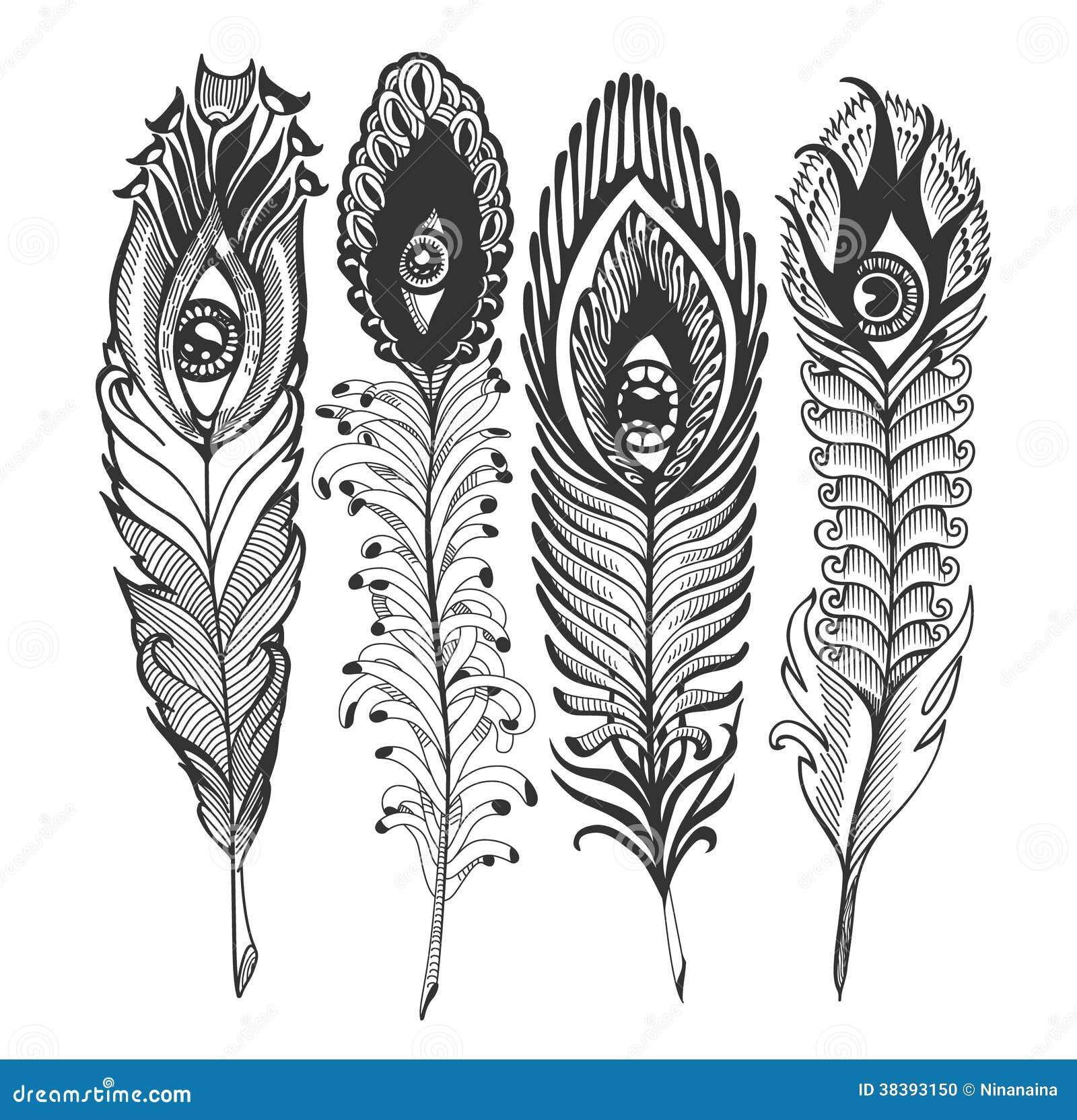 Plume avec des yeux illustration de vecteur illustration du nature 38393150 - Plume de paon dessin ...