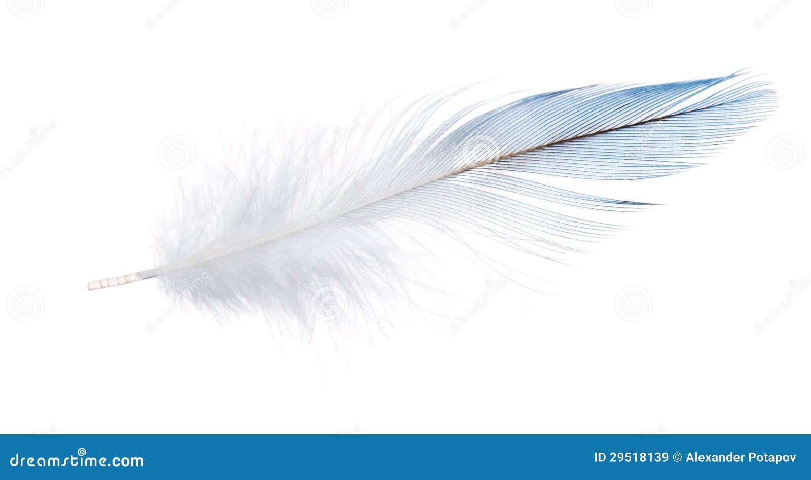 plume bleu clair de perroquet d 39 isolement sur le blanc. Black Bedroom Furniture Sets. Home Design Ideas