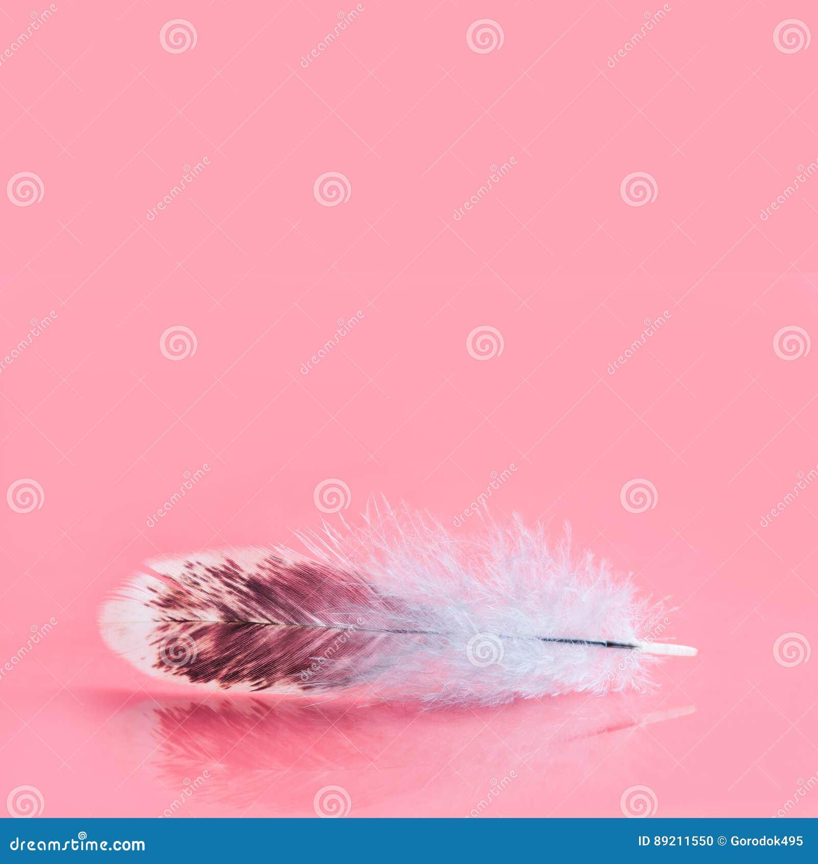 Plume colorée pelucheuse sur le fond rose Beau modèle pelucheux de plumage d oiseau Profondeur de champ sélective