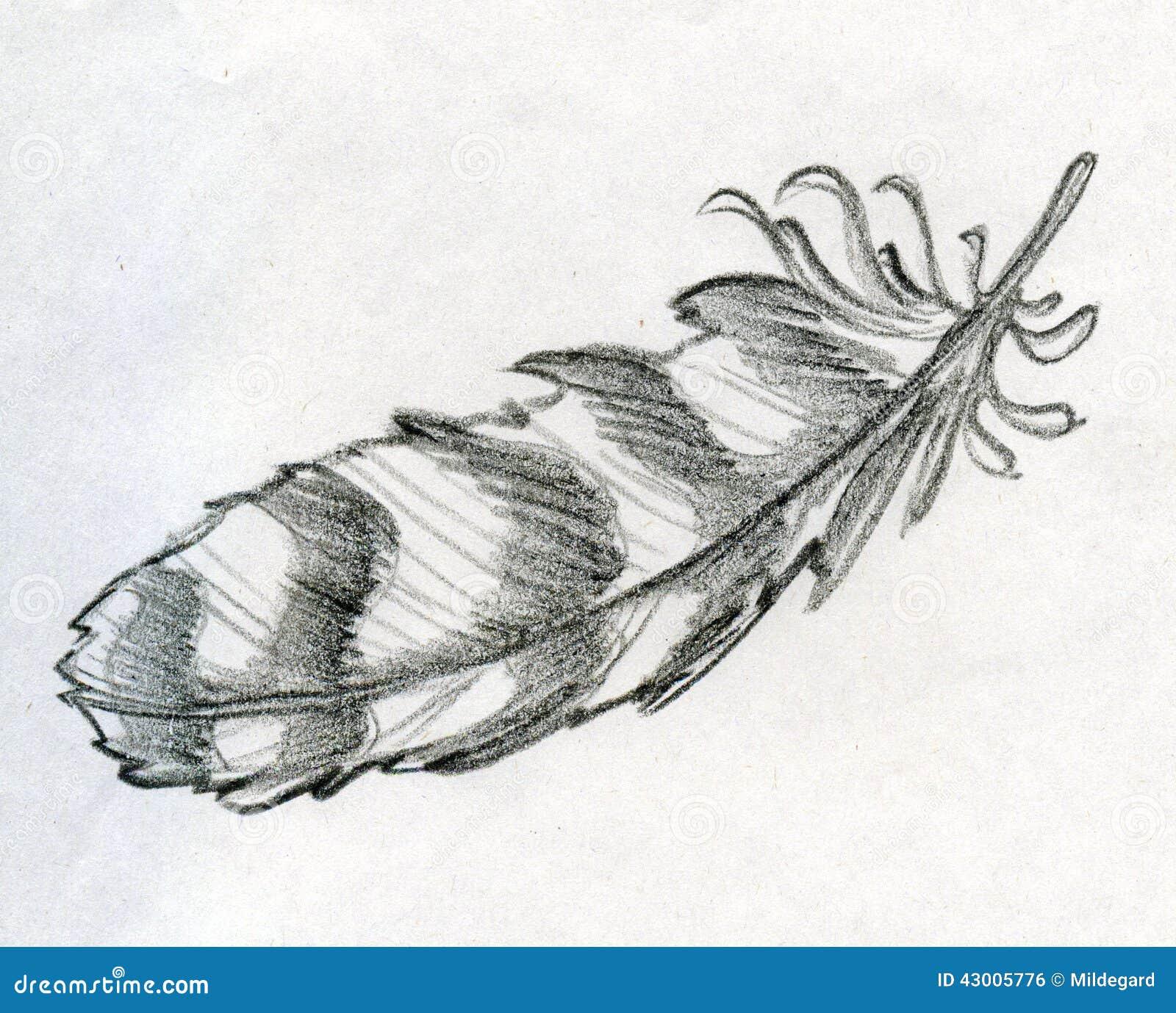 Croquis tir  233  par la main de crayon d une plume ray  233 e d aigle Outil d    Eagle Feather Pencil Drawing
