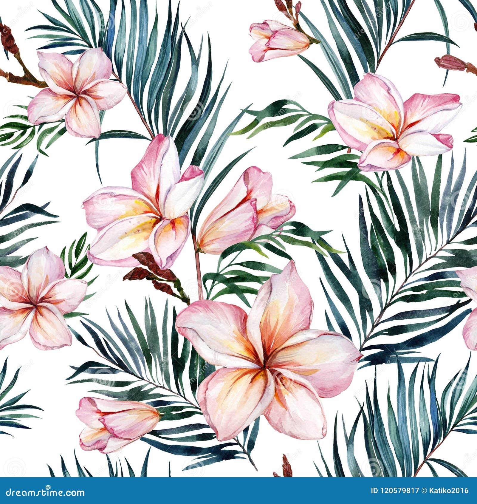 Plumeria цветет и экзотическая ладонь выходит в безшовную тропическую картину Белая предпосылка самана коррекций высокая картины