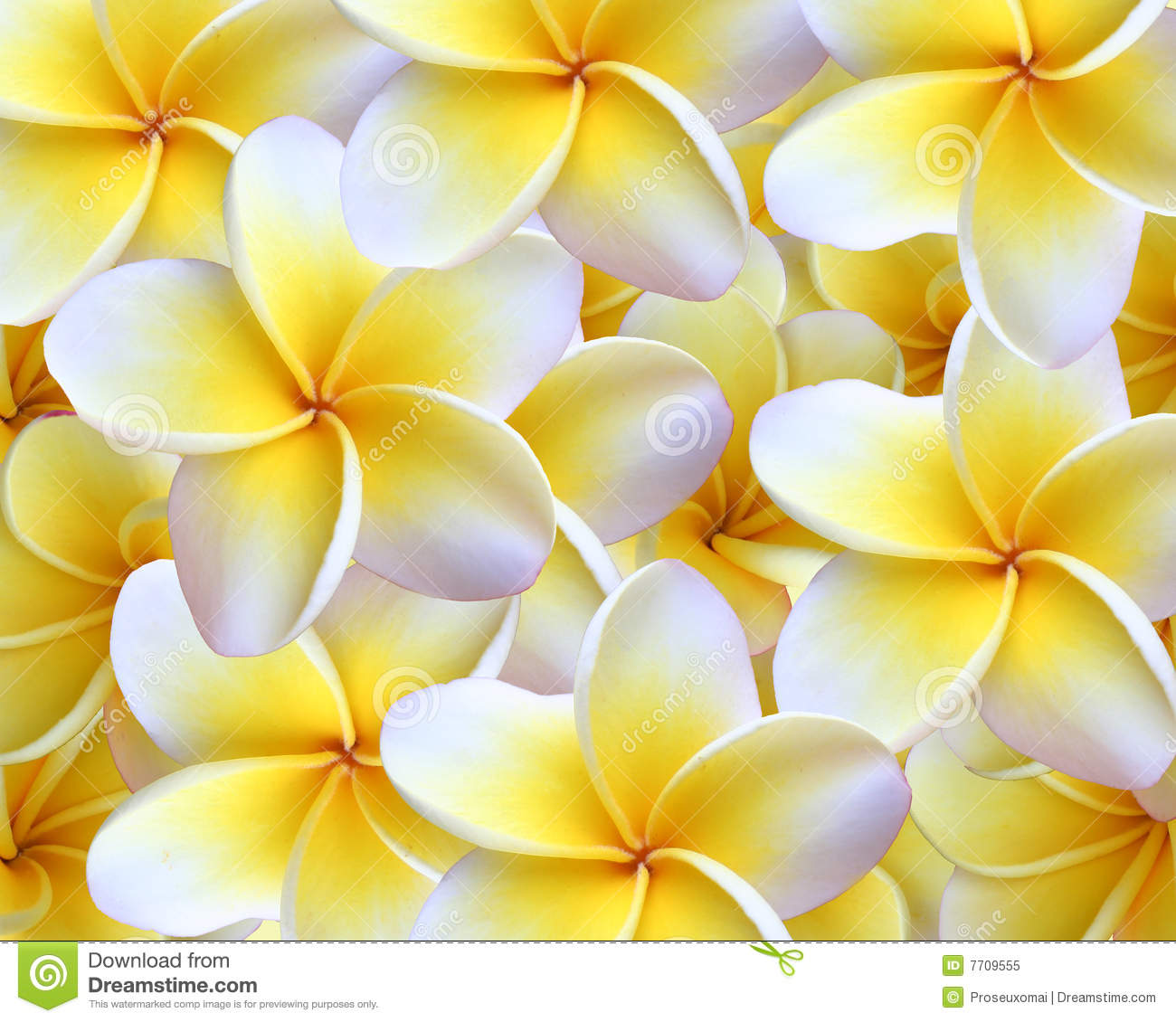 Beautiful flowers garden wallpapers full hd download - Plumeria Background Royalty Free Stock Photo Image 7709555