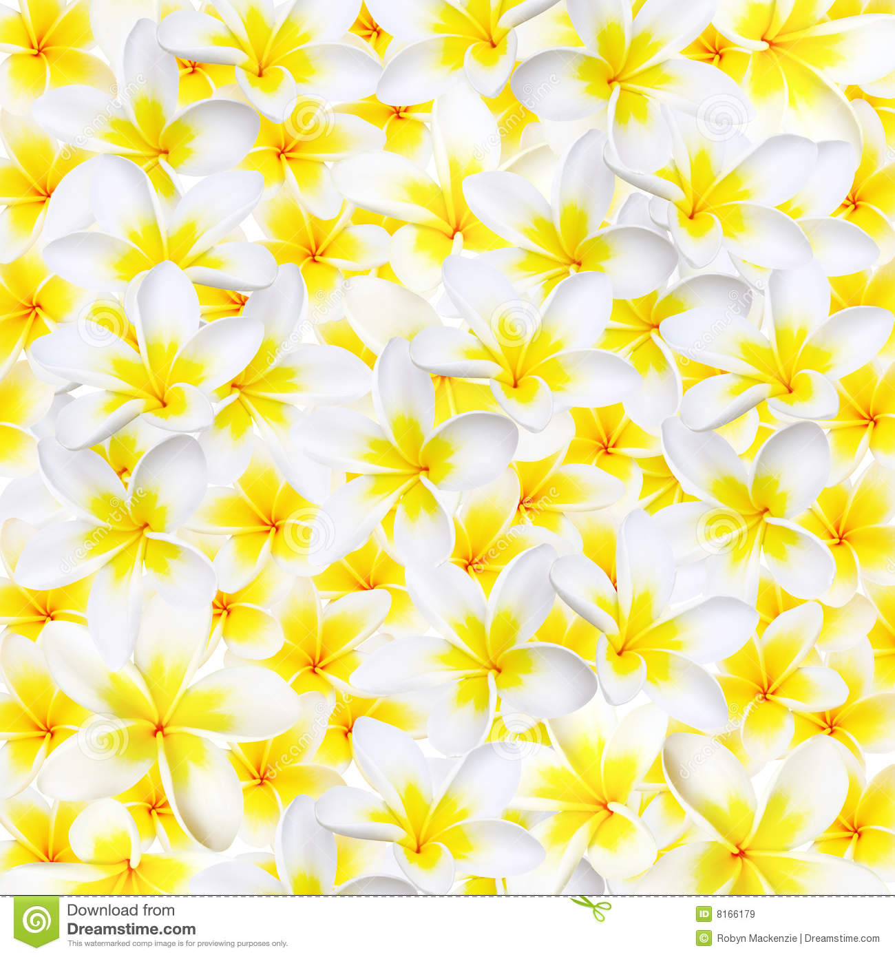 Red flowers border vector stock image - Plumeria Background Royalty Free Stock Images Image 8166179
