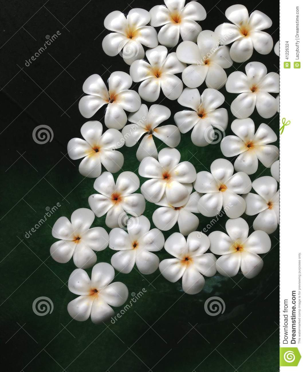 Plumeria flowers floating on the water stock photo image for Floating flowers in water
