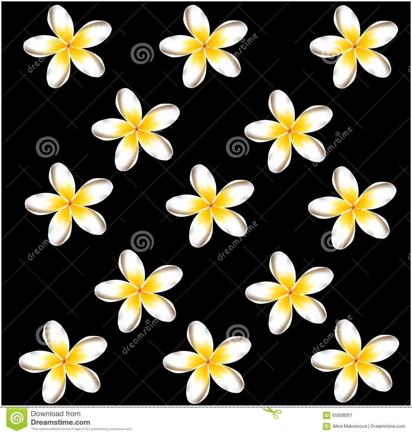 Plumeria Frangipani Flowers Black Background Stock Vector ... Leelawadee