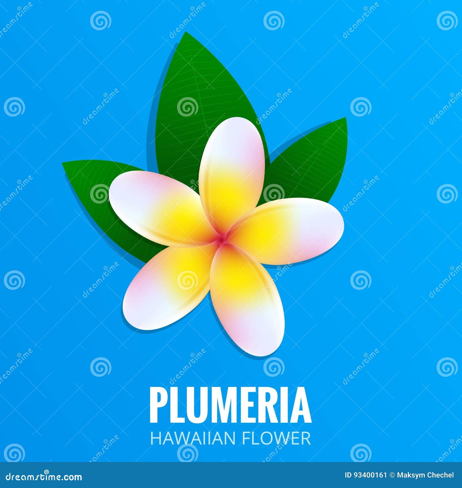Plumeria Hawaiian Flower Frangipani Tropical Flower With Leaves