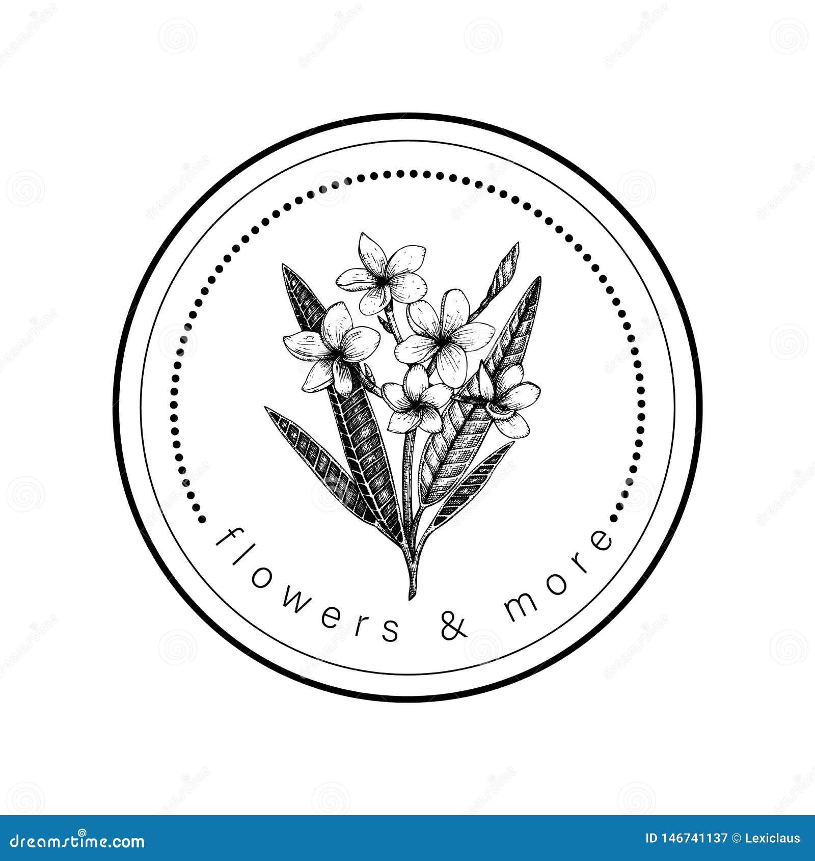 Plumeria tropical exhausto de la flor de la mano del vector en un círculo