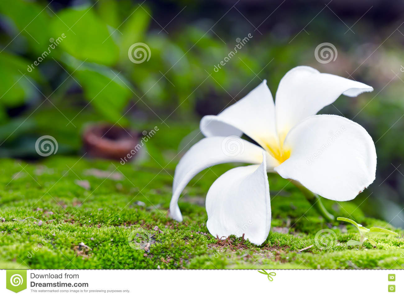 White Flowers Names And Images - Blueridge Wallpapers