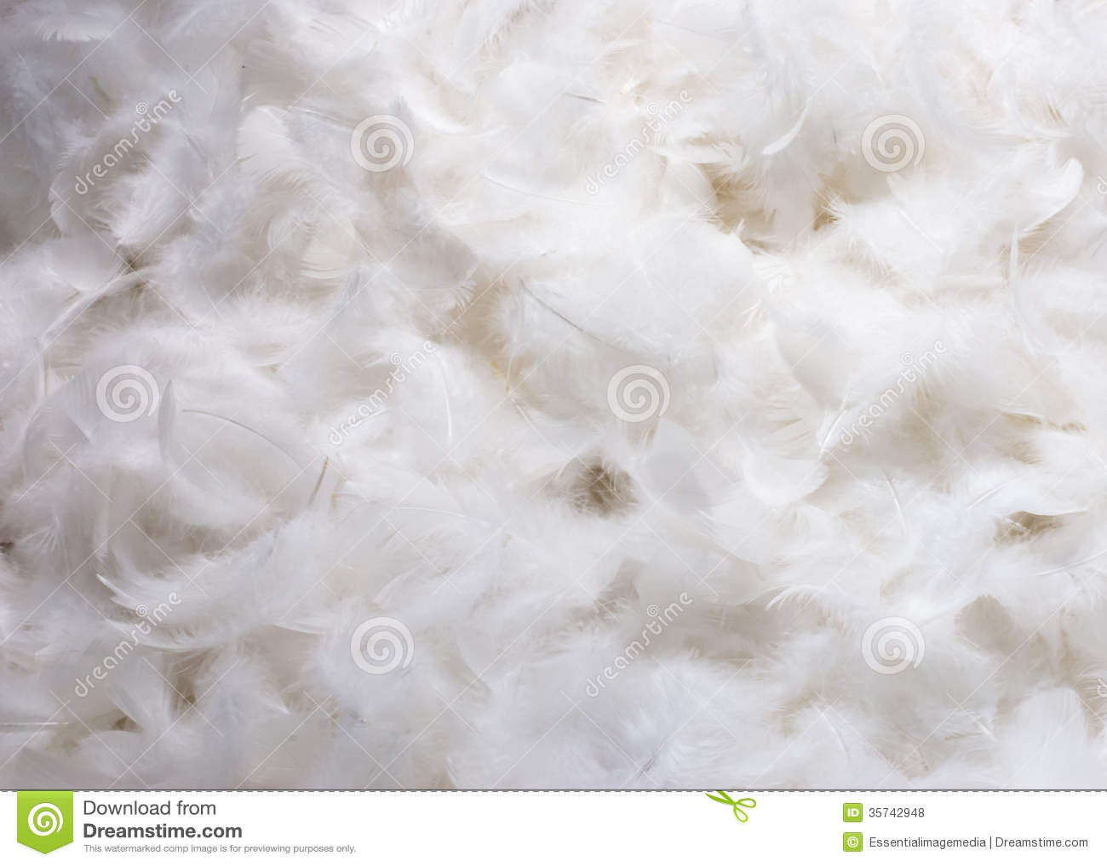 plumes blanches photos libres de droits image 35742948. Black Bedroom Furniture Sets. Home Design Ideas