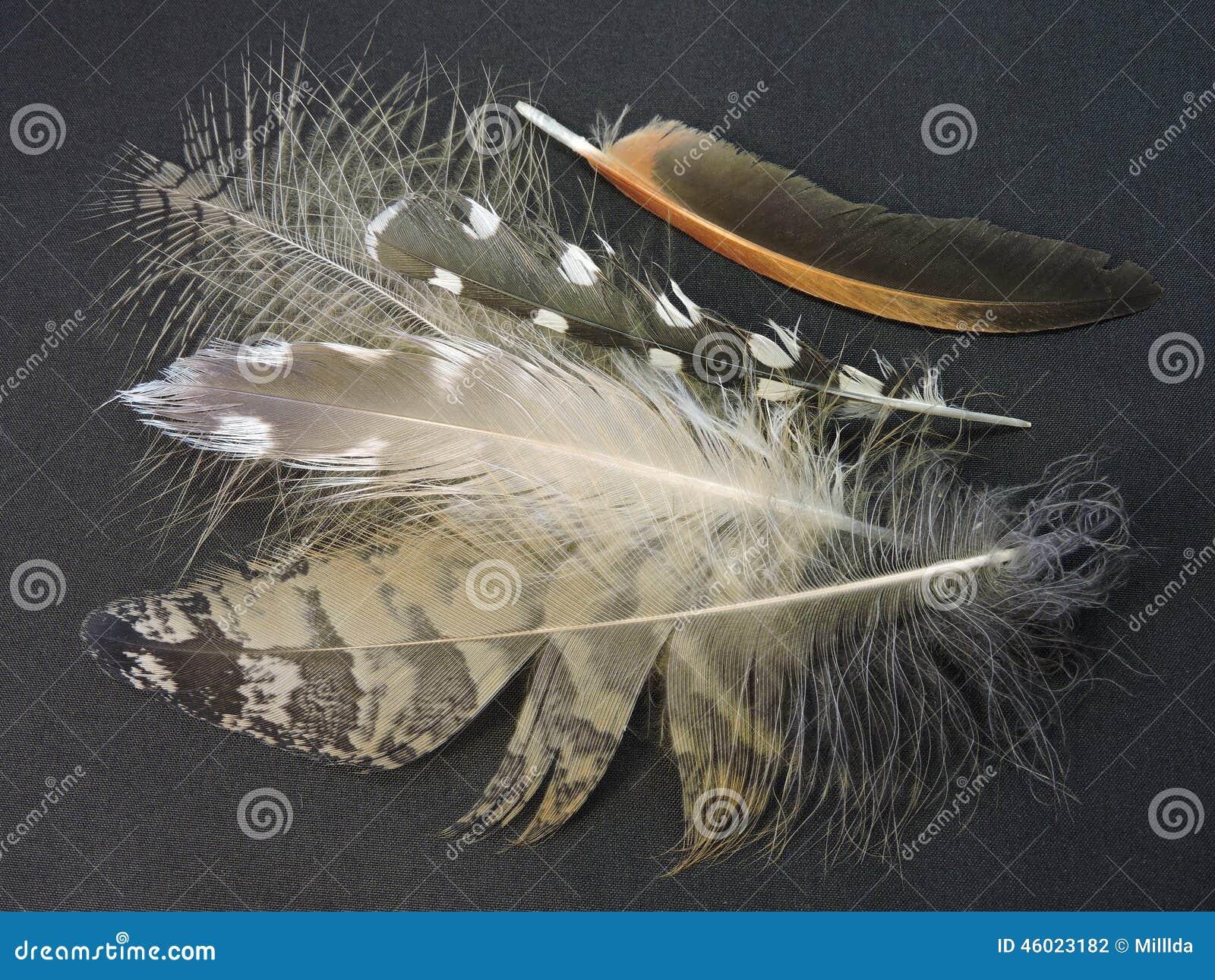Plumes d 39 oiseaux photo stock image 46023182 - Signification des plumes d oiseaux ...