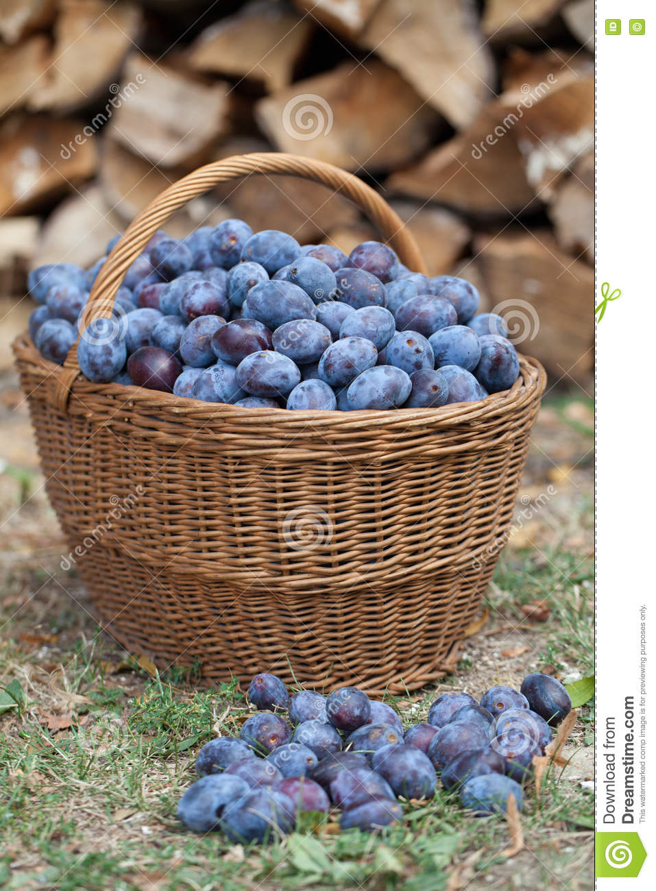 Download Plums in a basket stock photo. Image of large, healthy - 71217188