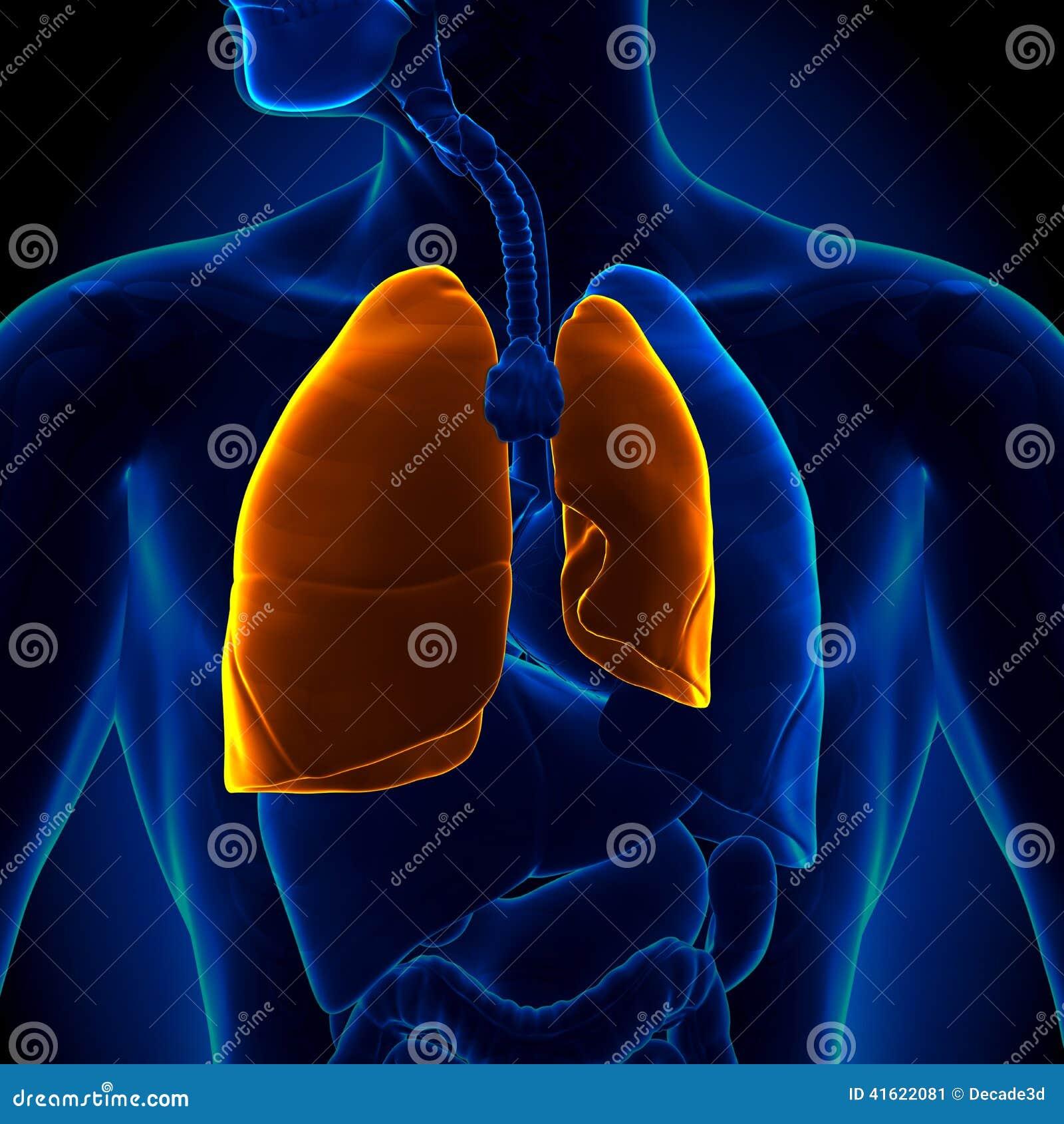 Pneumotorace - polmone crollato