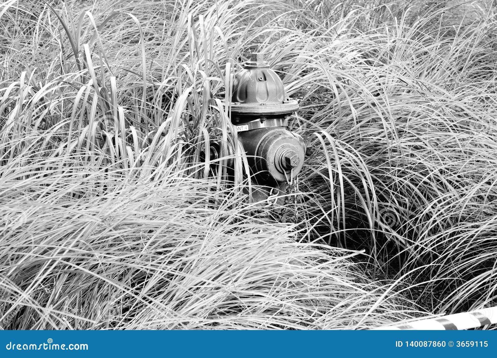 Pożarniczy hydrant w trawie