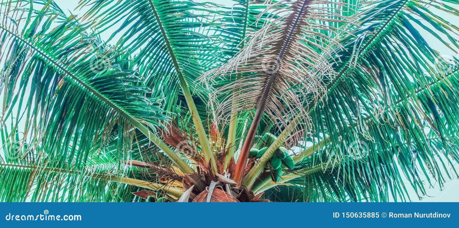 Połówka wierzchołek drzewko palmowe