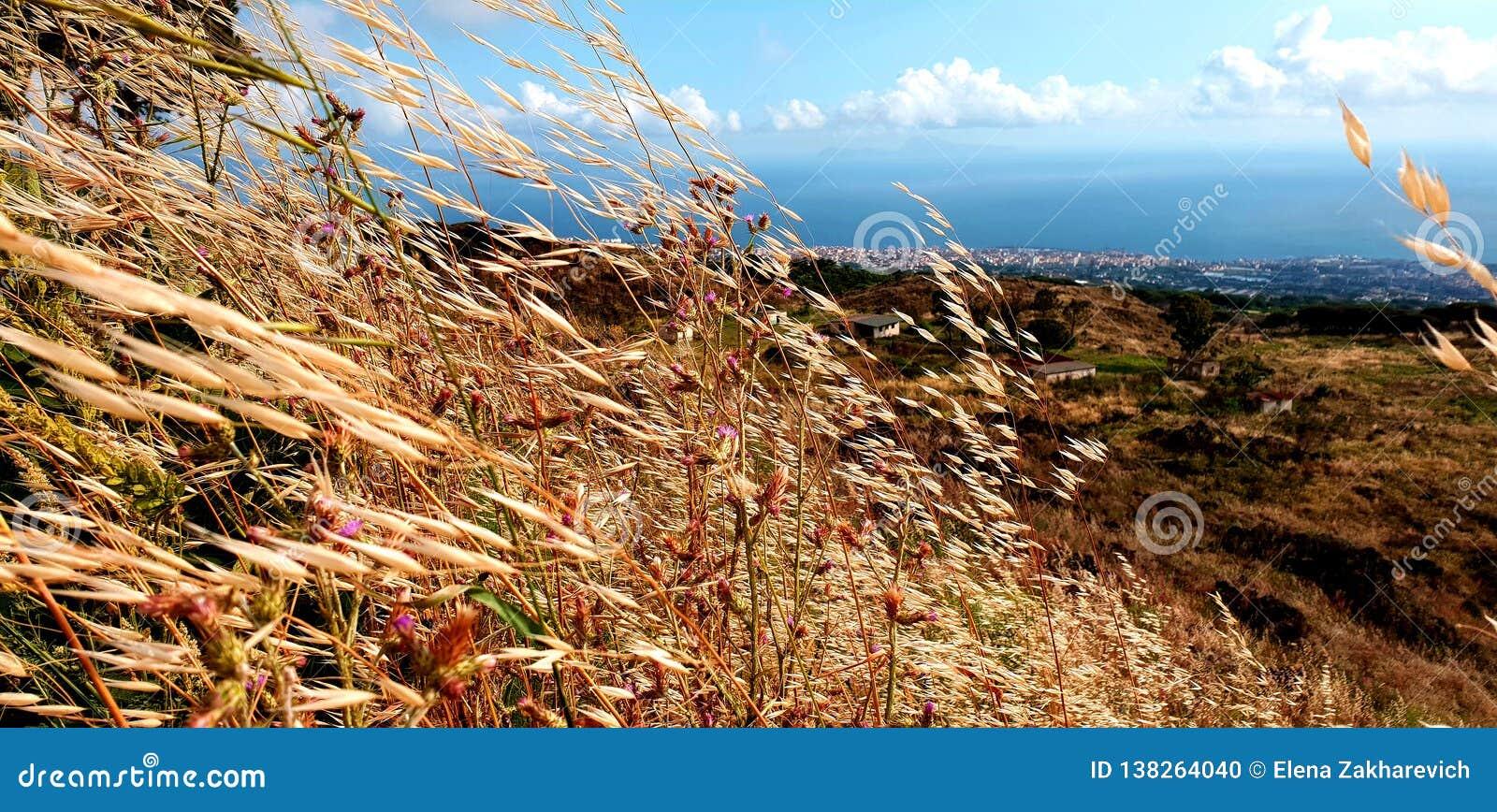 Południowy Włochy, pole owsy i morze