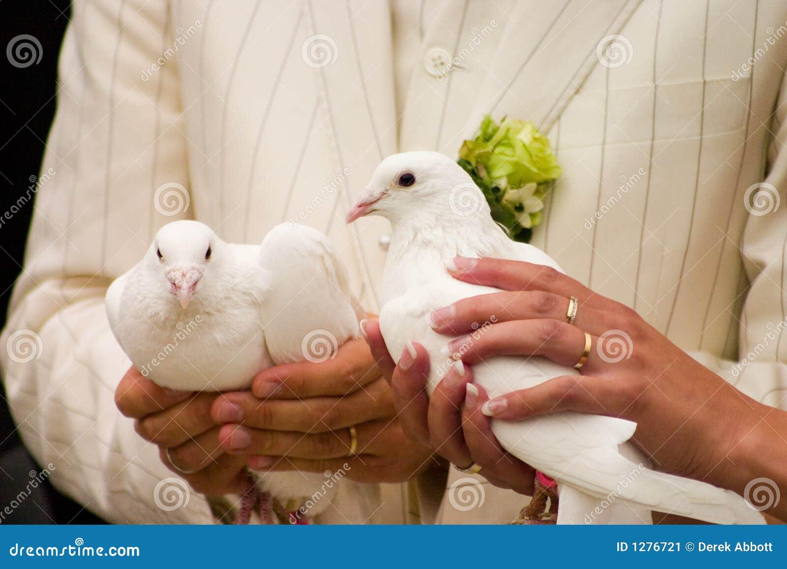 Poślubić gołębi