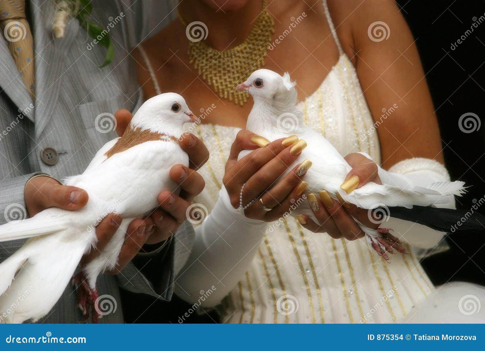Poślubić gołębie