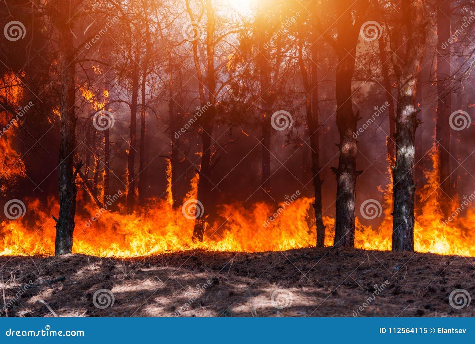 Pożar Lasu Palący drzewa po pożarów lasu i udziałów dym