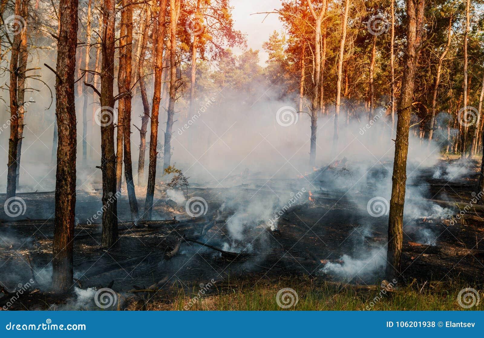 Pożar Lasu Palący drzewa po pożaru, zanieczyszczenia i mnóstwo dymu,