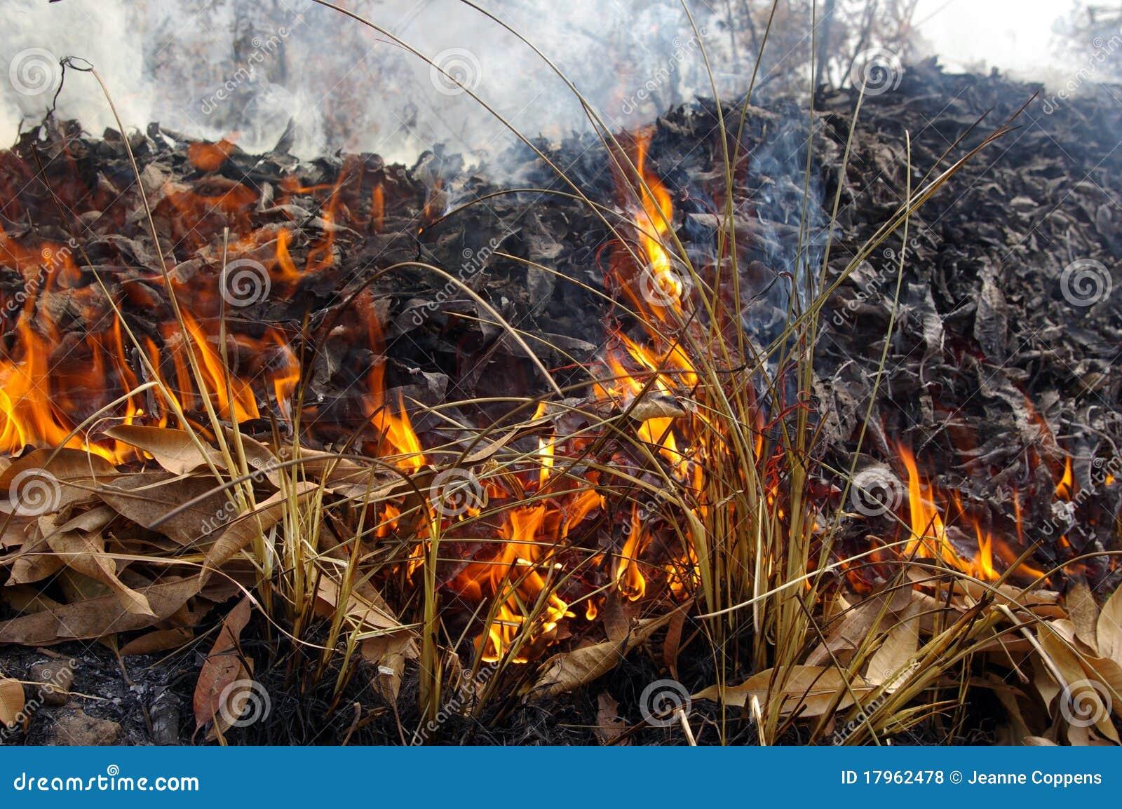 Pożarnicza trawa