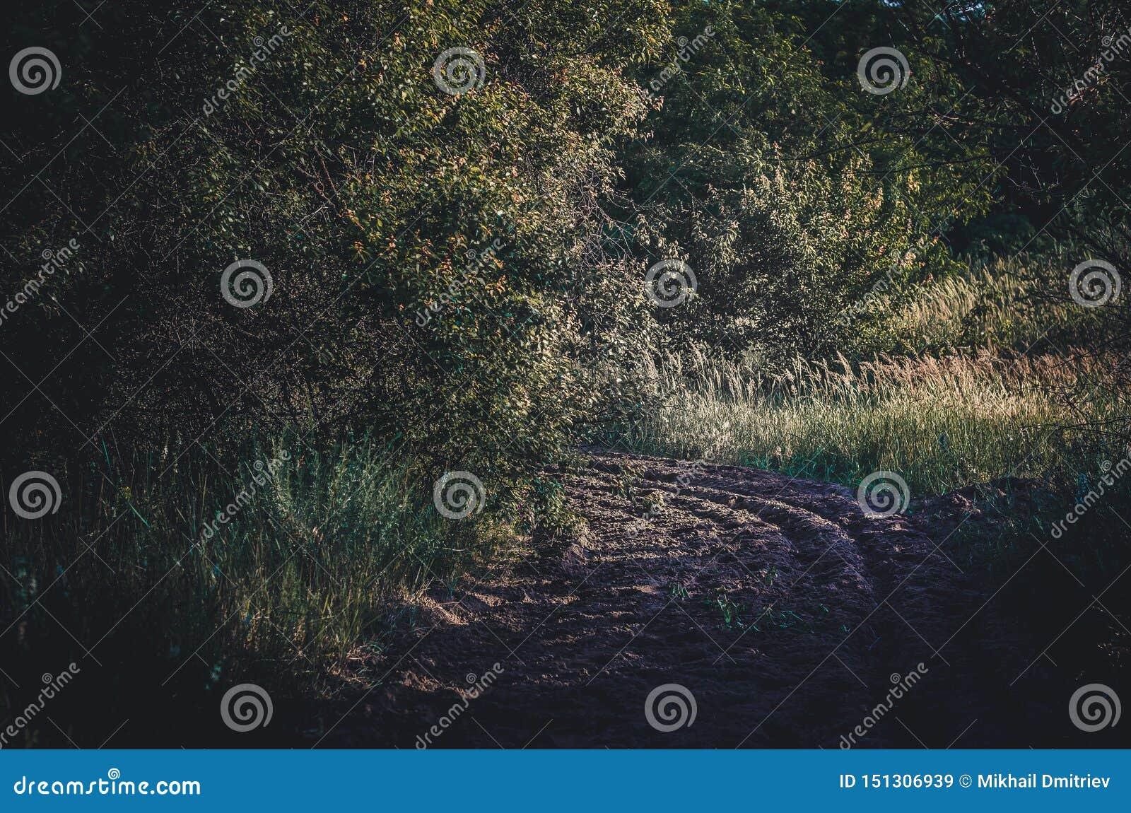Pożarniczy rozdzielenie odbojnicy pasek w krajowej rezerwie Orze piasek dla paska od ogienia Chronienie lasy od ogienia