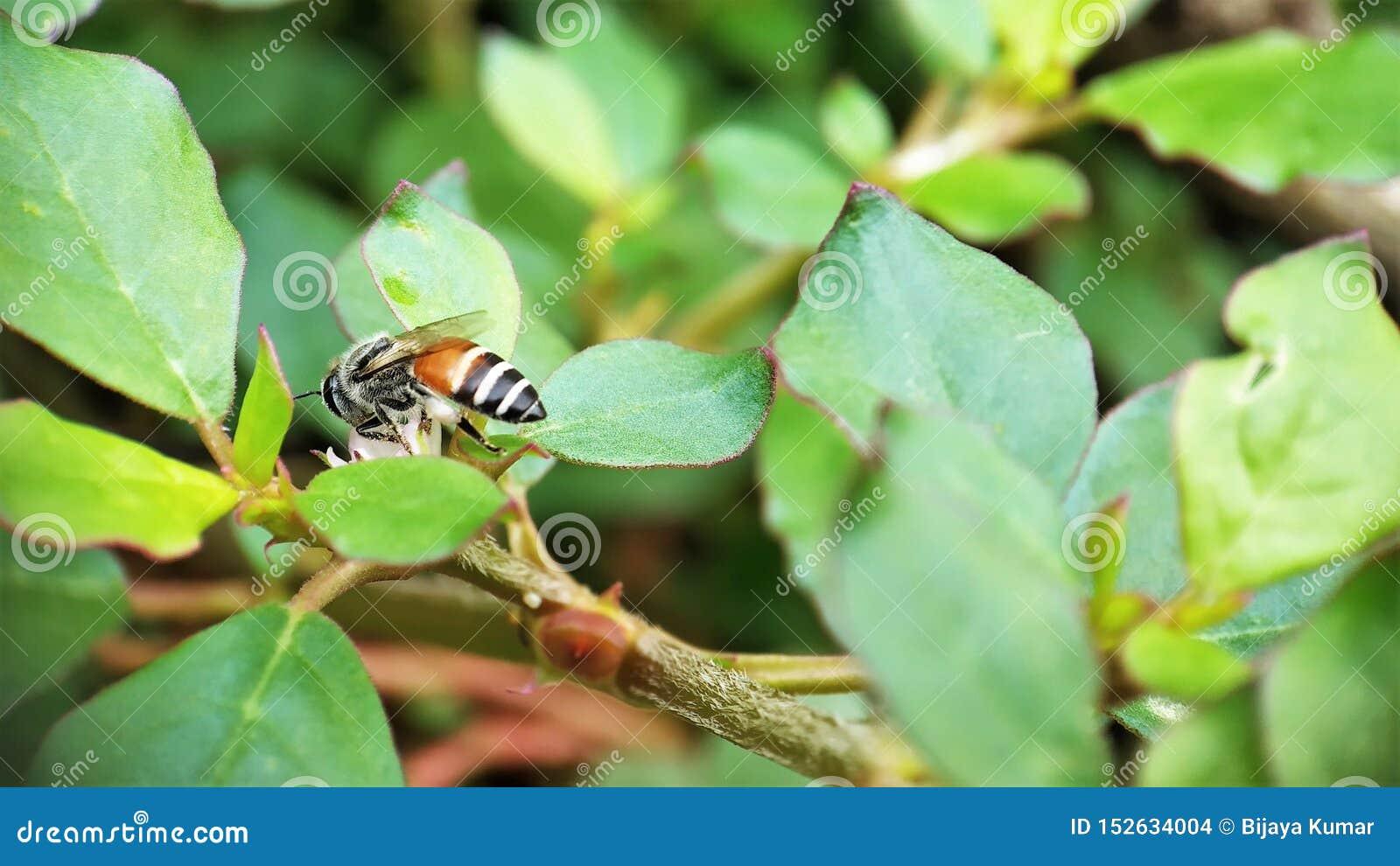 Po lato Miodowej pszczoły zastanawia się na małych kwiatach w ogrodowym lewym widoku