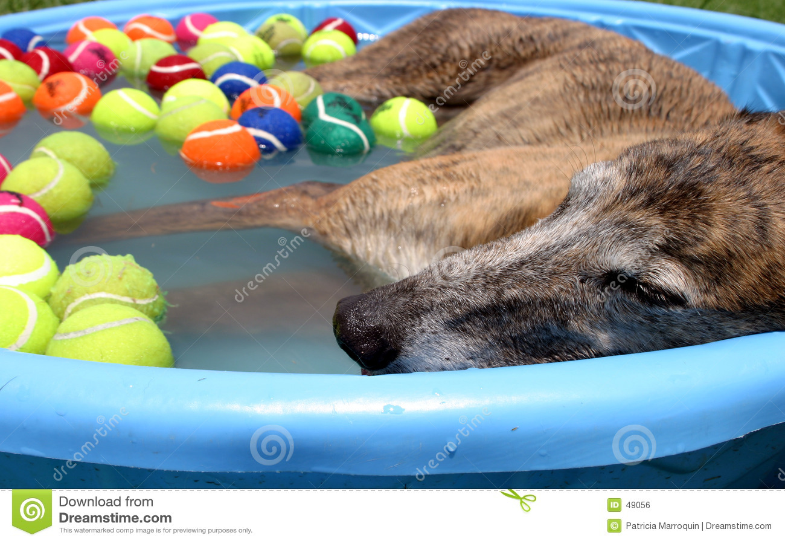 Po południu dnia pies
