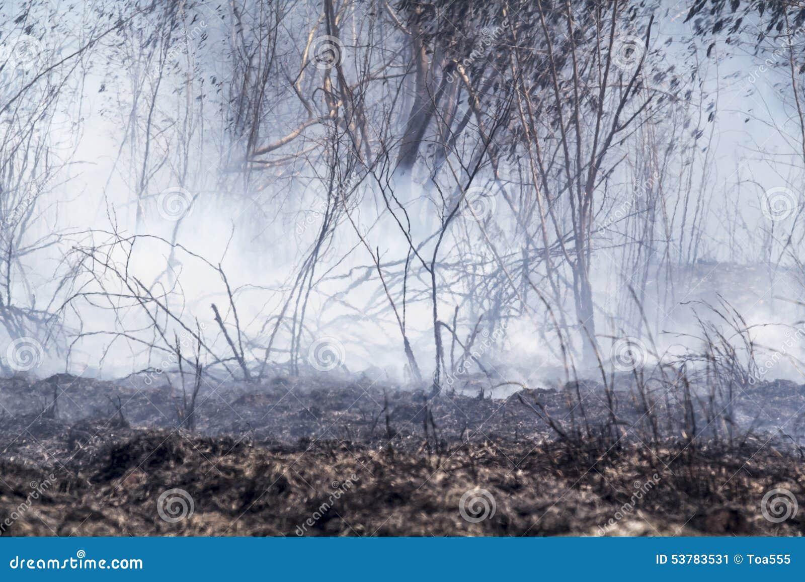 Po zniszczonego palić tropikalnego las