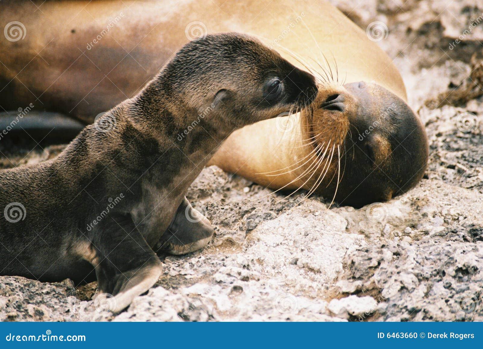 Pocałunek sealion