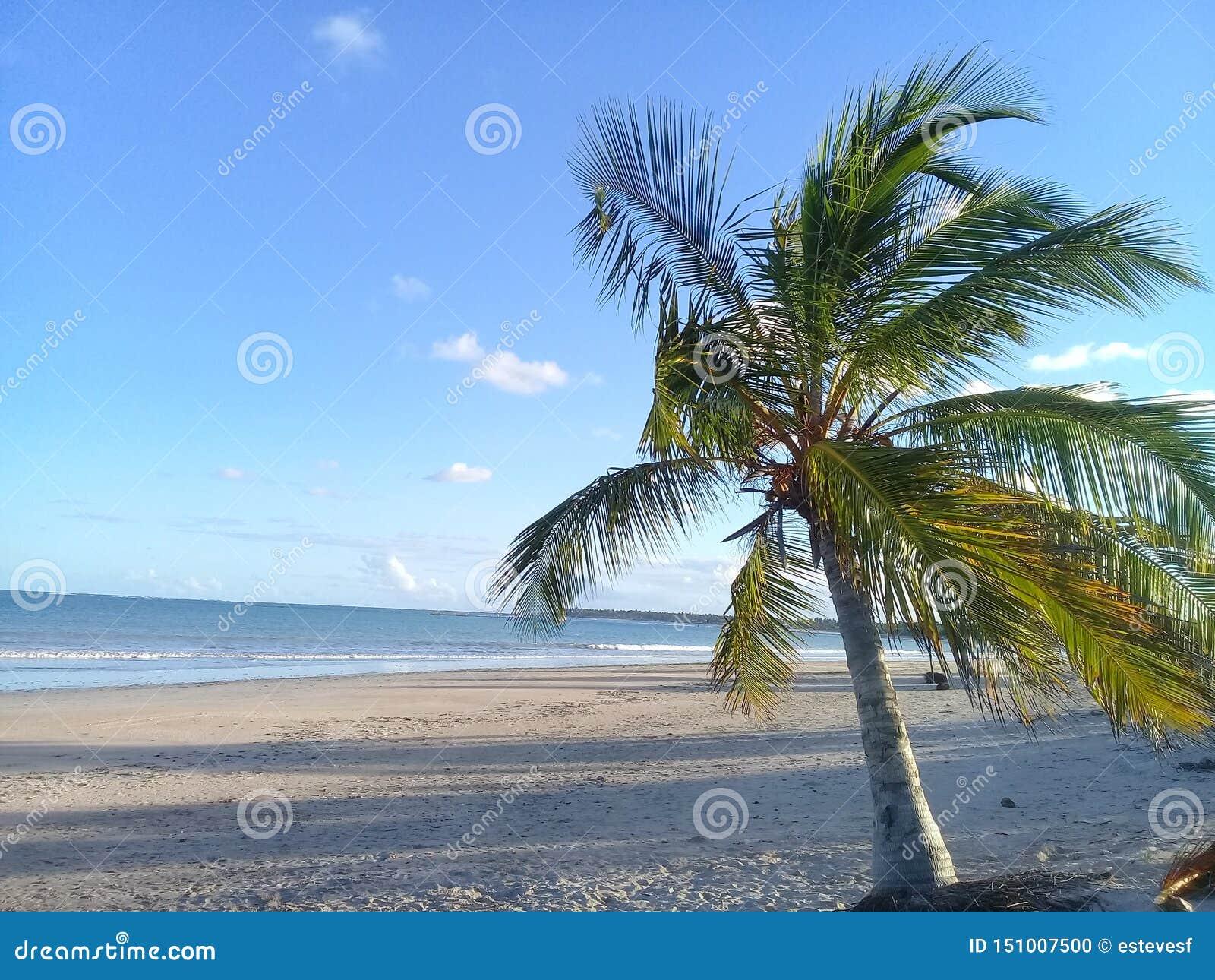 Poca palmera en la playa